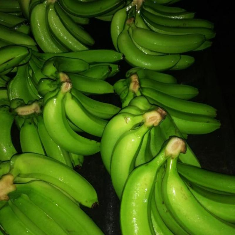 Bananas from company B-LABEL | Côte d'Ivoire