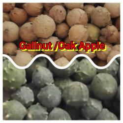 Gallnut, Oak Apple