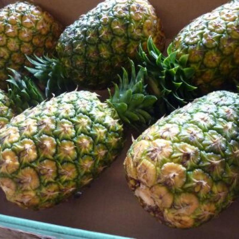 Pineapples buy wholesale - company B-LABEL | Côte d'Ivoire