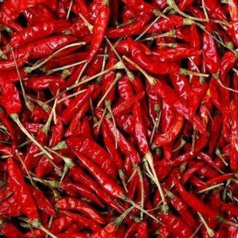 Red Chilli from company ROYAL FINE INTERNATIONAL | India